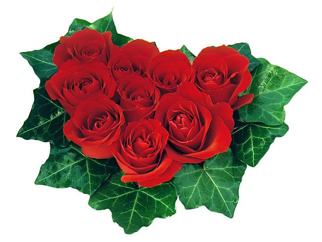 Цветы рекомендуется дарить девушке